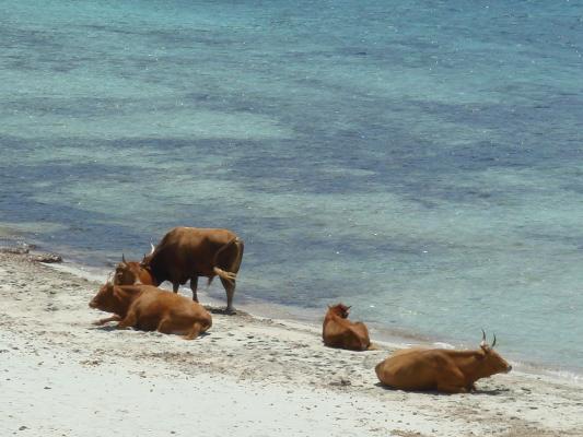 Piscinni Beach